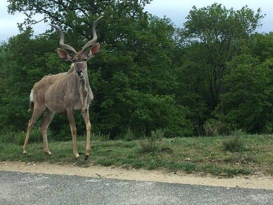 Ardeche, France: Bienvenue au safari