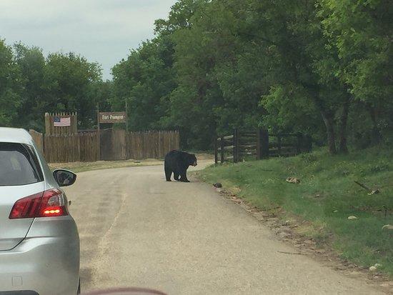 Ardeche, France: Traversée du parc des ours