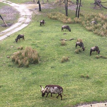 Disney's Animal Kingdom Villas - Kidani Village: photo4.jpg