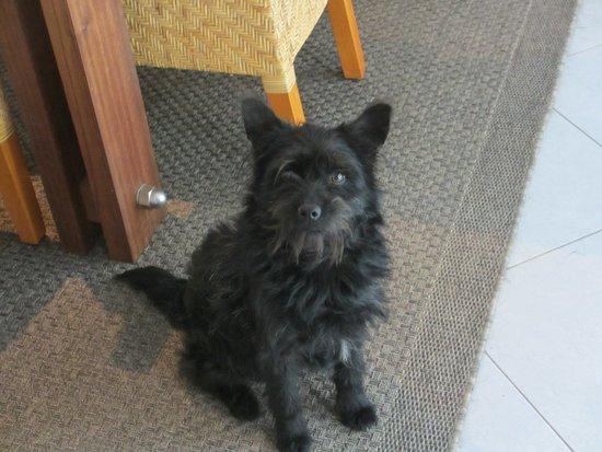 """Coimbra District, Portugal: our Portuguese rescue dog """"Preto"""""""
