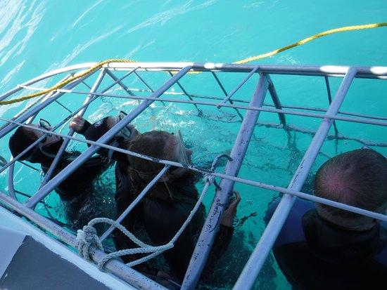 Kleinbaai, جنوب أفريقيا: Caged up