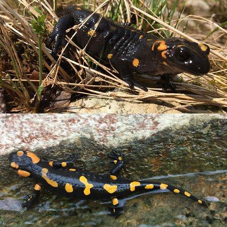 Canyoning Lab Enjoy Water: salamandre