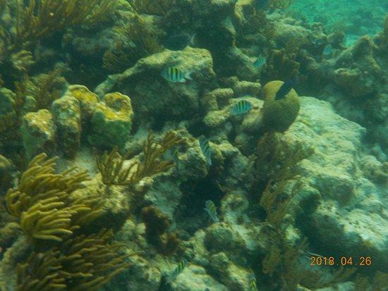 East End, Grand Cayman: 20 feet below