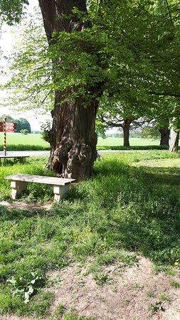 Veltrusy, جمهورية التشيك: lavička pod stromy