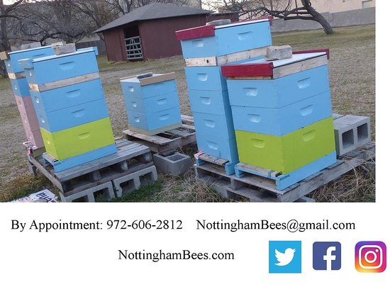Nottingham Bees: Schedule your Apiary (Bee Yard) Tour Today!