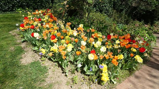 Jardins des Martels : Flowers