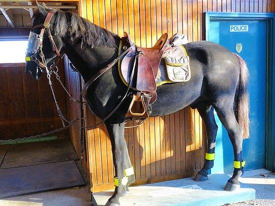 mounted police barn - Picture of Kentucky Horse Park, Lexington