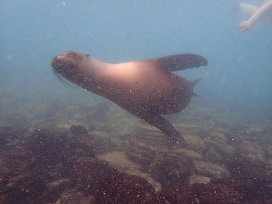 Guiding Galapagos Expeditions: Swimming with Sea Lions