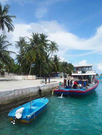 Omadhoo Island: harbor