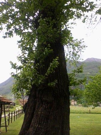 Parco Avventura La Turna: Albero maestoso