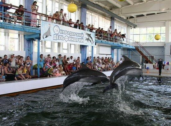 Karadag Dolphinarium