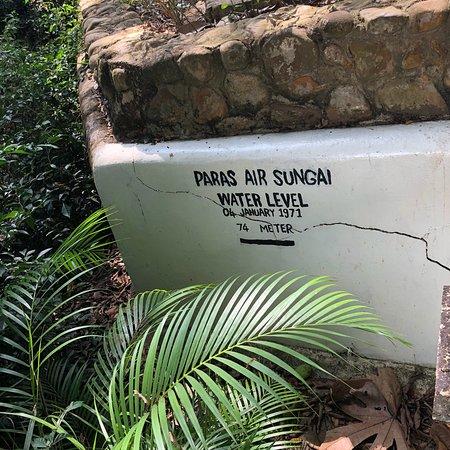 Kuala Tahan, ماليزيا: photo5.jpg