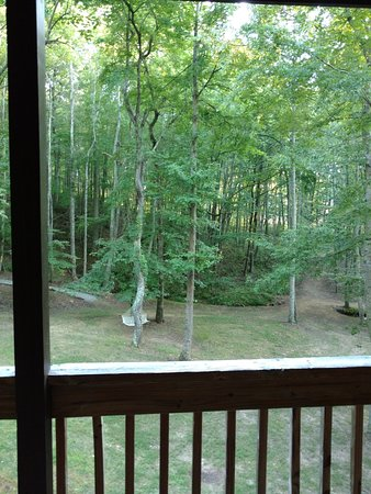 Asheville Cabins of Willow Winds: View of the woods from the porch outside the living room.