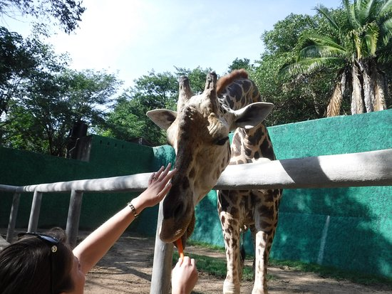Zoologico de Vallarta-billede