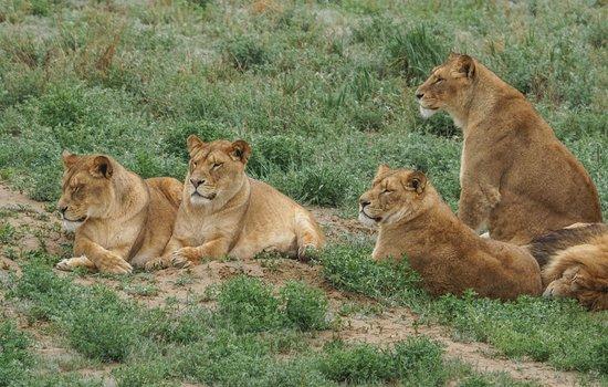 so many amazing animals キーネスバーグ wild animal sanctuaryの