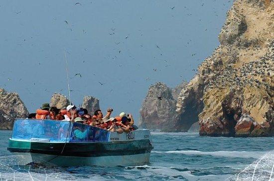 Paracas und Ballestas Inseln...