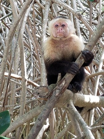 Manuel Antonio Expeditions: 20180507_081723_large.jpg