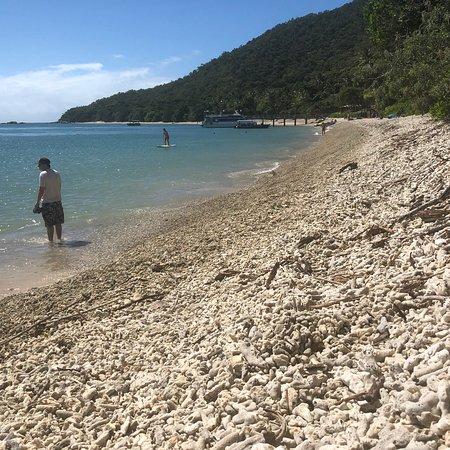 Fitzroy Island, ออสเตรเลีย: photo2.jpg
