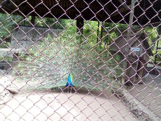 Nova Kakhovka, Ukrajina: Мини-зоопарк