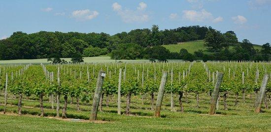 Laurel Gray Vineyard & Winery: Vineyard