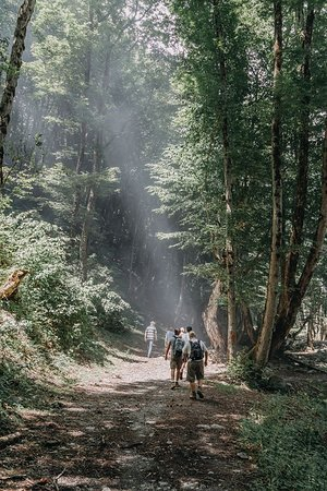Lagodekhi, جورجيا: Hiking in the mysterious forests of national park