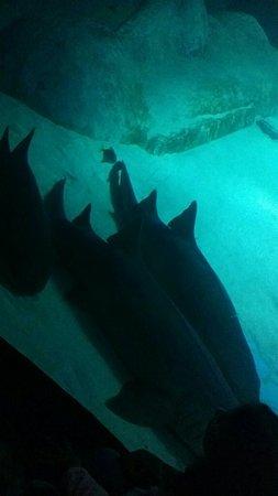 SEA LIFE London Aquarium : Snapchat-1878666770_large.jpg