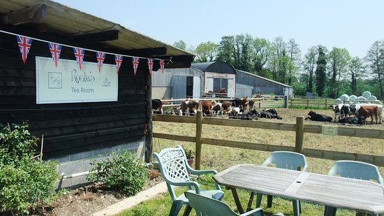 Heckfield, UK: Coffee with the cows.!