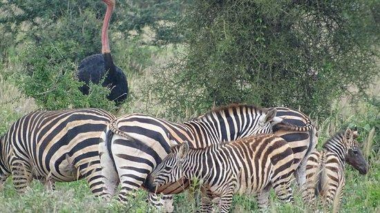 Tsavo, كينيا: DSC00735_large.jpg
