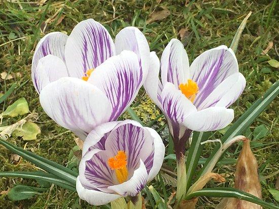 Chatton, UK: April flowers