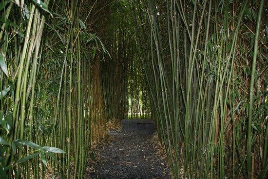 Athis-de-l'Orne, Γαλλία: A l'abri des bambous