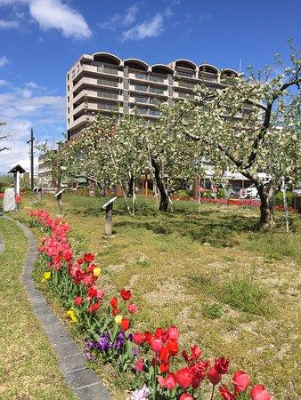 Iida, Japan: リンゴの花の季節