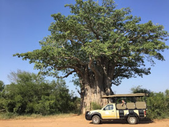 Hoedspruit, South Africa: Our private safari through Kruger Park. Amazing!