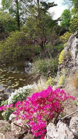 Azaleenpracht Am See Im Botanischen Garten Flora Picture Of