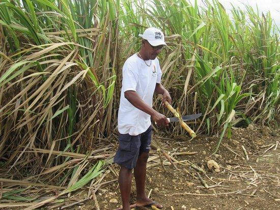 Tropical Paradise Excursions : Notre Bob adoré en train de nous préparer de la canne à sucre