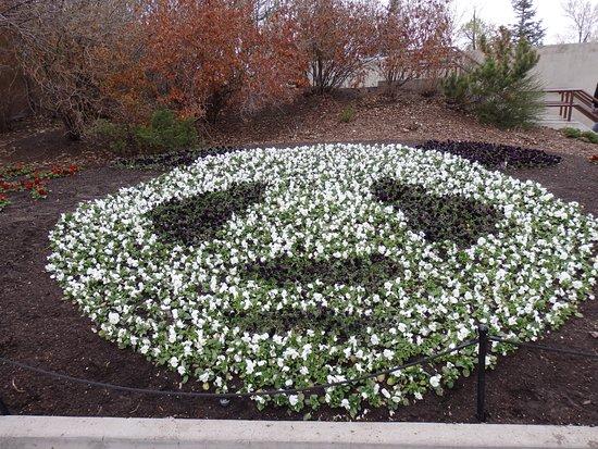The Calgary Zoo: Panda flowers