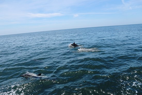 Newport Landing Whale Watching: Common dolphin alongside the boat