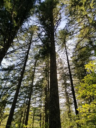 Sublimity, OR: 20180512_163210_large.jpg