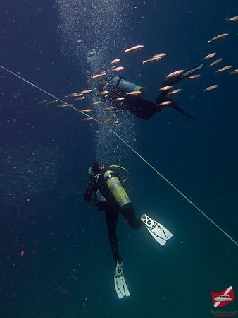 First rate dive company!