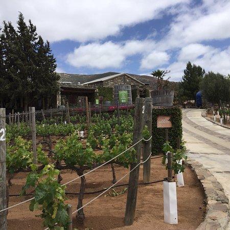 Napa Valley Wine Country Tours: photo3.jpg