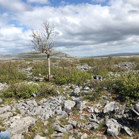 Heart of Burren Walks: photo0.jpg