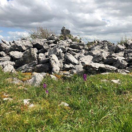 Heart of Burren Walks: photo1.jpg