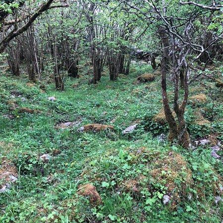 Heart of Burren Walks: photo3.jpg
