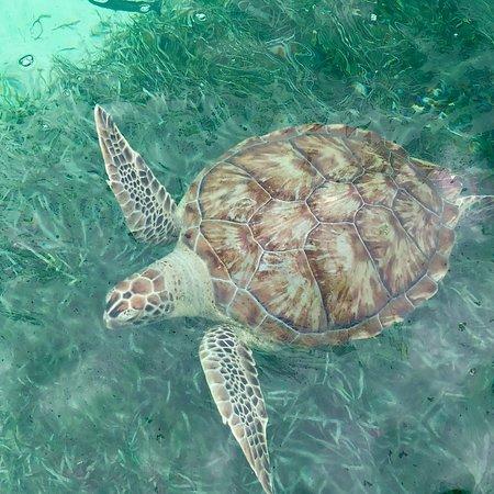 Brendal's Dive Center ภาพถ่าย