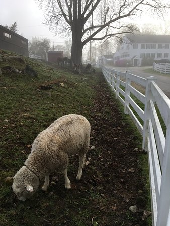 Troy, NH: Misty morning on the farm