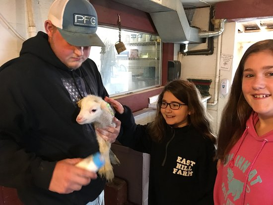 Troy, NH: Who doesn't love a baby lamb?