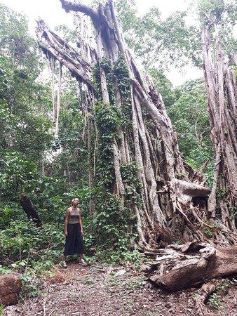 Boabeng-Fiema Monkey Sanctuary : 20180512_161324_large.jpg