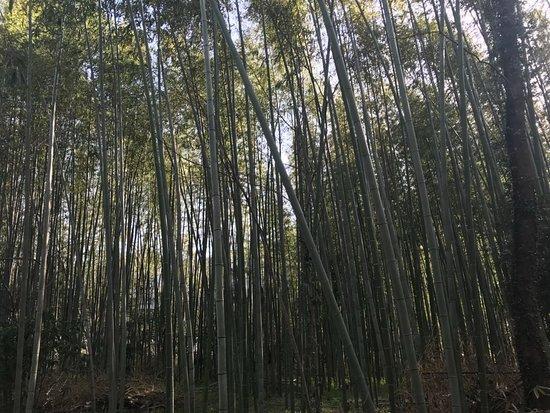 Bamboo Forest Street: IMG-20180330-WA0120_large.jpg