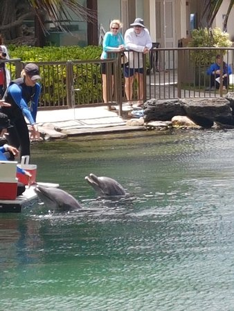 Dolphin Quest ภาพถ่าย