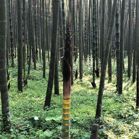 Yunxi Zhujing Scenic Resort: photo2.jpg