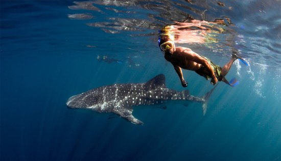 Exmouth, Australia: swimming with the whale sharks on Ningaloo Blue
